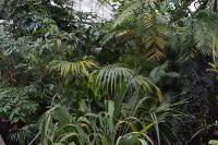 Сухие тропики Нового света