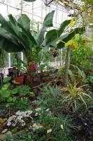 Полезные растения тропиков
