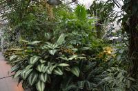 Влажные тропики Нового света