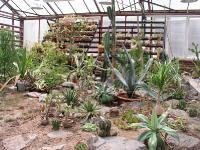 Экспозиция кактусов и суккулентов