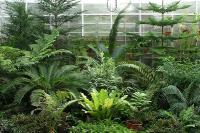 Экспозиция растений Пермского периода