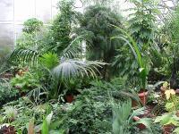 Сухие тропики